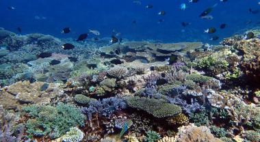 Récif corallien, ©Francesca Benzoni IRD-Projet POST BLANCO
