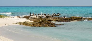 Créé en avril 2014, le parc naturel de la mer de corail s'étend sur 1,3 million de km2 et comprend notamment les récifs d'Entrecasteaux (photo ci-dessus).jpg