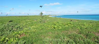 Ilot le leizour, réserve intégrale aux atolls d'Entrecasteaux, parc naturel de la mer de corail.jpg