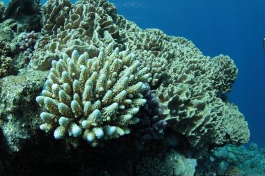 Pristine reef,  parc naturel de la mer de corail,  scientific mission, Jean-Michel Boré IRD