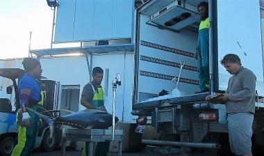 Pêche hauturière, débarquement au quai (c) Programme observateurs de Nouvelle-Calédonie
