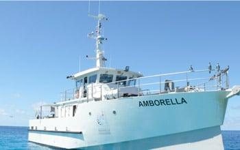 L'Amborella, David Ugolini, SCO