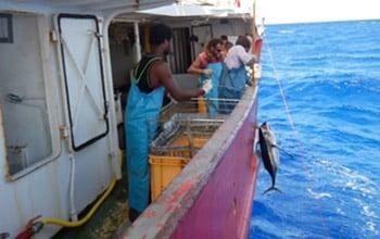 Campagne de pêche sur le navire Arau, DAM SPE