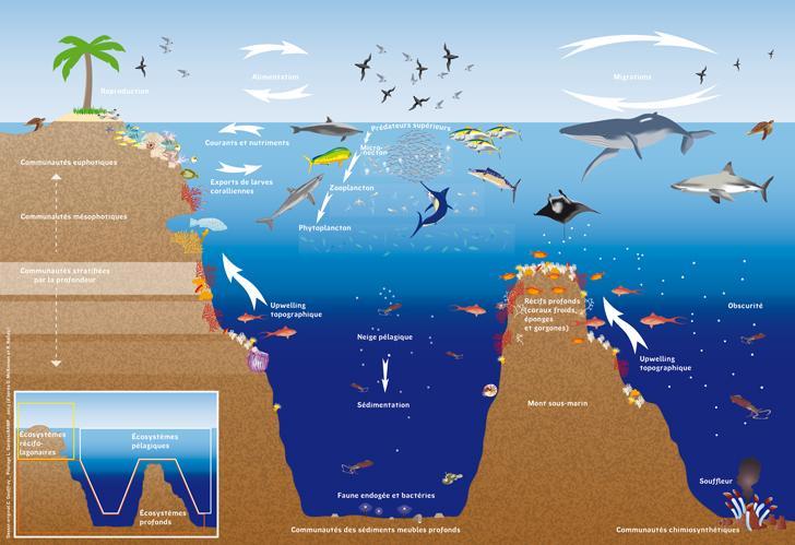 La diversité des relations entre les écosystèmes, Catherine Geoffray, Lionel Gardes, Agence des aires marines protégées