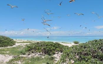 Ilot Leleizour, atolls d'Entrecasteaux, David Ugolini, SCO