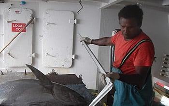 Mesure d'une capture sur le navire Katia, DAM SPE