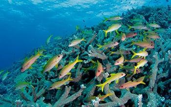 Pristine reef, Jean-Michel Boré, IRD Mission Pristine