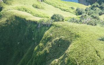 Pandanus et fougères sont présents sur l'île Hunter, DAM/SPE