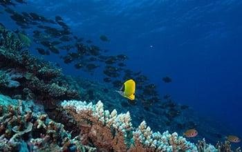 Coral reef, Phillipe Frolla, (c) University of New Caledonia