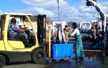Débarquement de thons au retour de la campagne de pêche DAM SPE