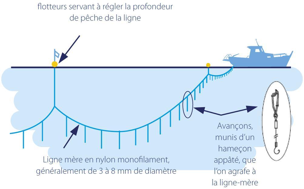 Le principe de la pêche à la palangre, Push and Pull