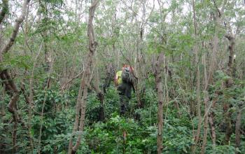 Walpole, forêt de mimosa, Richard Griffiths