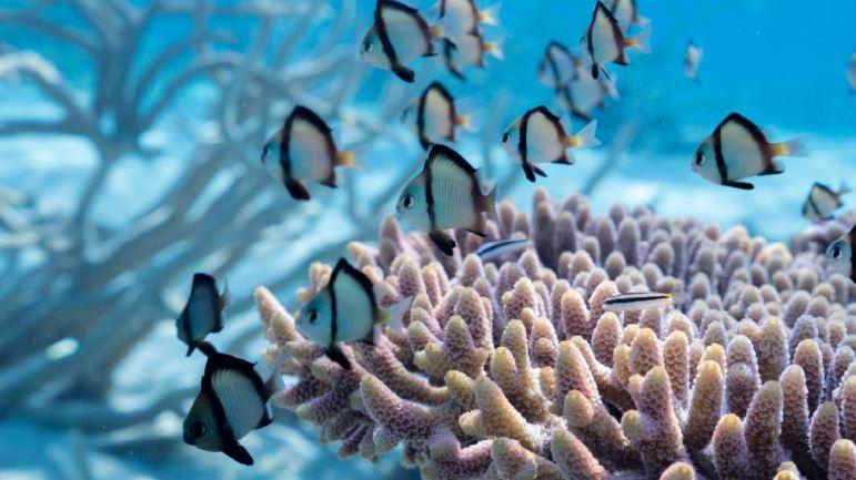 Récif corallien, Jean-Michel Boré, IRD
