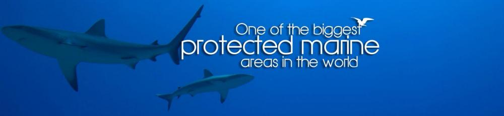 Sharks in the natural park of the coral sea
