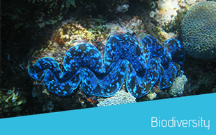 biodiversity_btn_en.jpg